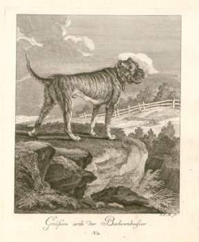 Boxer dog ancestor