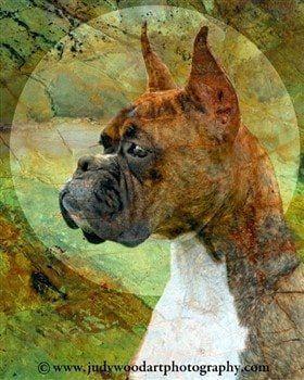 boxer-dog-art-01