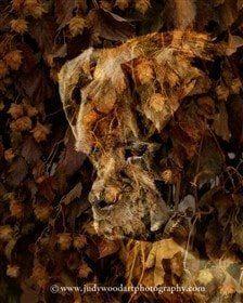 boxer-dog-art-04