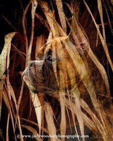 boxer-dog-art-07