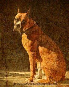 boxer-dog-art-08