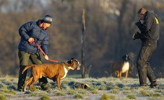 boxer-dog-barking-at-trainer
