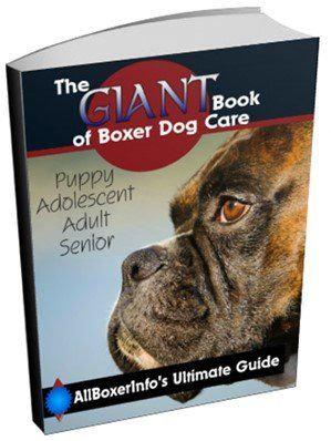 Boxer dog care book