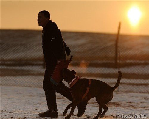 boxer-dog-clinging-to-trainer-at-sunset