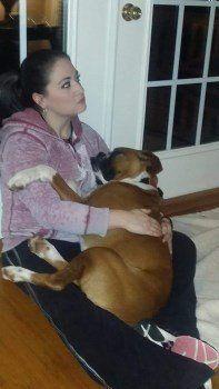 Boxer dog napping