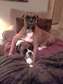 Paisley And Dexter Photo Courtesy Of Owners Dwayne Cathy Morman