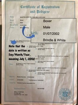 Document showing DOB for 2nd Oldest Boxer Dog
