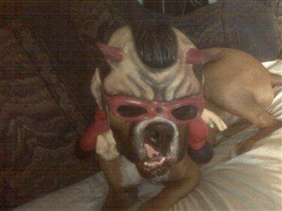 boxer-dog-punk-rock-halloween-costume
