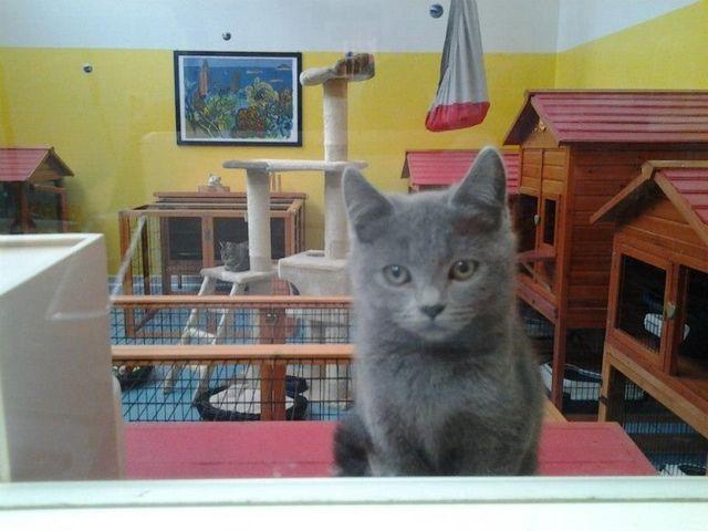 Gatto guardando dalla finestra