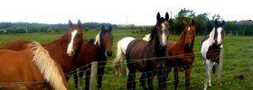 Livery and schooling - Pembrey  - Pembrey Equestrian Centre - Breeding