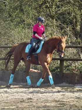 Horse and pony livery - Carmarthenshire - Pembrey Equestrian Centre - Horse Riding