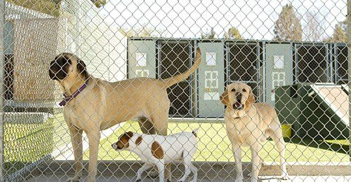 View of dogs in a behind a fence