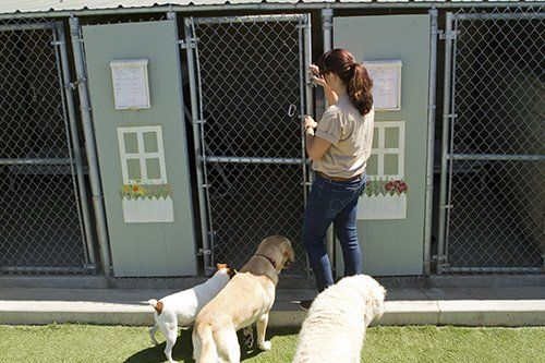Professional taking the dogs into a cell