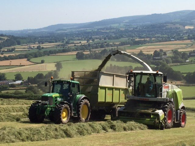 top-quality silage