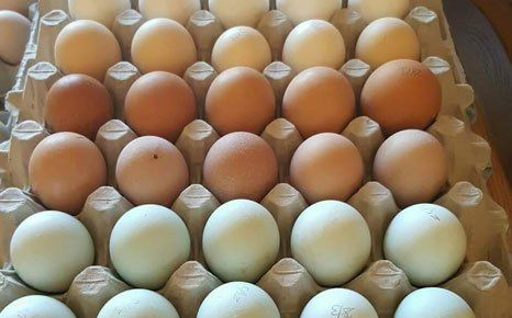 eggs of diffenet colours