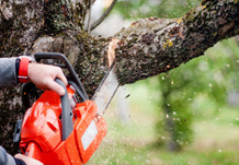 Tree surgeon cutting branch with a chainsaw