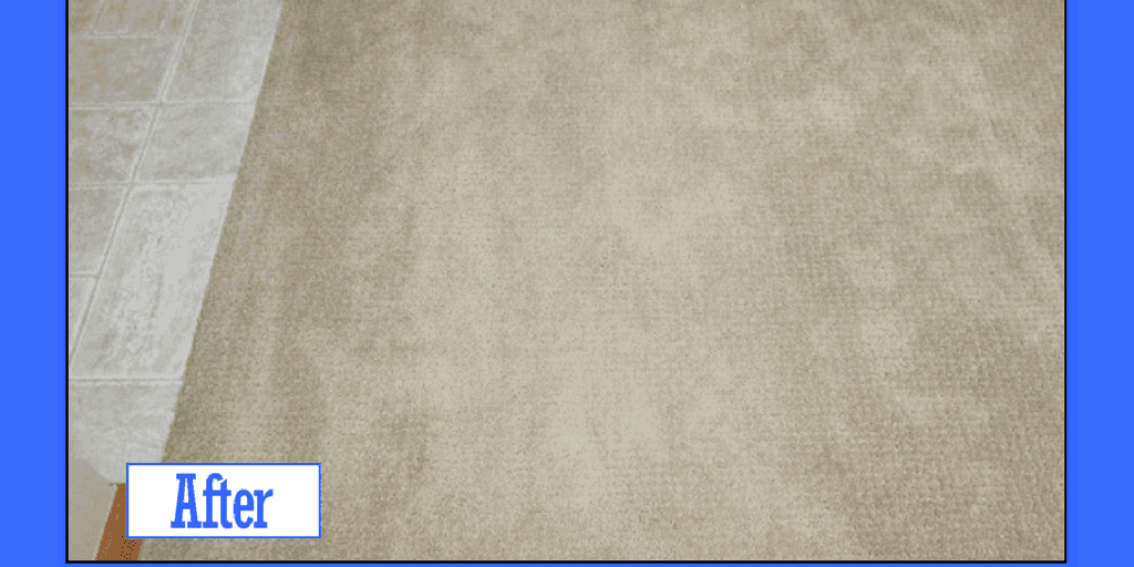 Carpet Dyeing Services Pet Odor Stain Removal Service Carpet