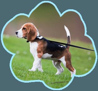 Pampered dog