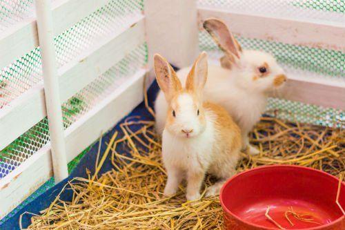due coniglietti in una gabbia