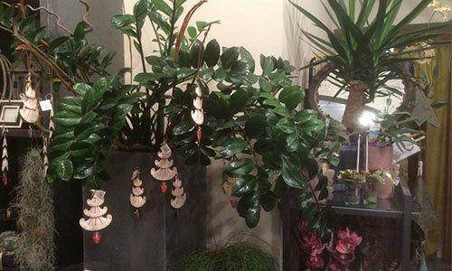 una pianta verde scura e altre su un carrello all'interno di un negozio di fiori