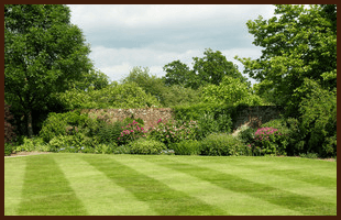 A large lawn surrounded by flower beds