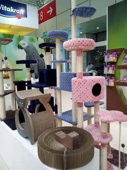 palestre per gatti