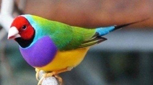 un pappagallino colorato