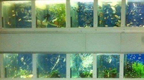 serie di acquari in negozio di animali