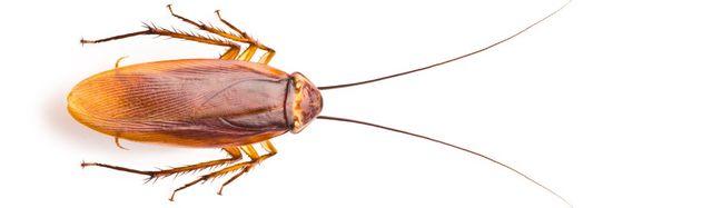 Image result for pest