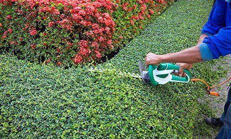 Rasatura alberi ad alto fusto presso Il Volo Logistica e Servizi a Campi Bisenzio (FI)