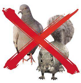 Pest control - Padiham - Padiham Pest Control - Squirrel