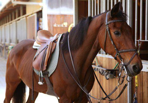 Uno splendido cavallo sellato