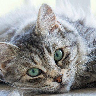 Pure Balance Cat Food Website