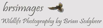 brsimages logo