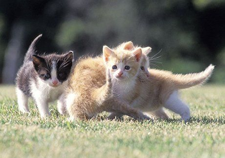 Catteries