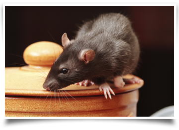 Rodent Services Lumberton, NC