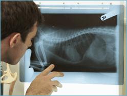 radiologia per animali