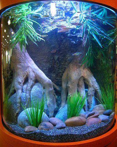 弯曲的玻璃 - 水族馆
