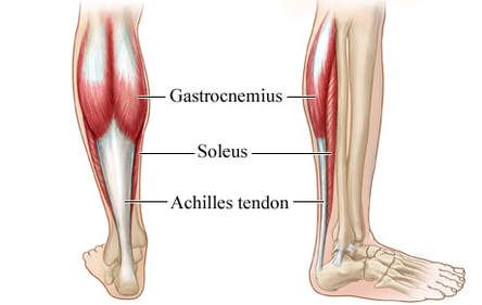 tendon function and dysfunction