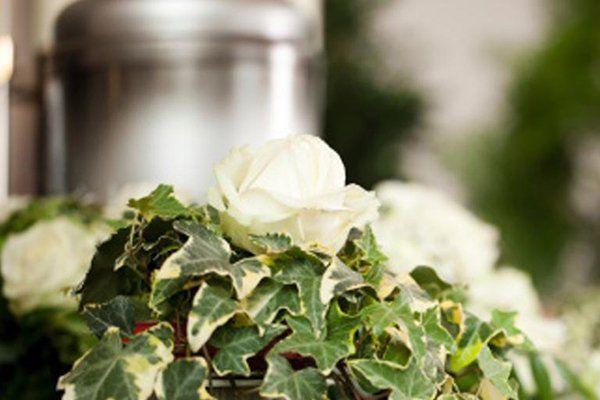 dei fiori bianchi con delle foglie