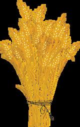mazzo di grano