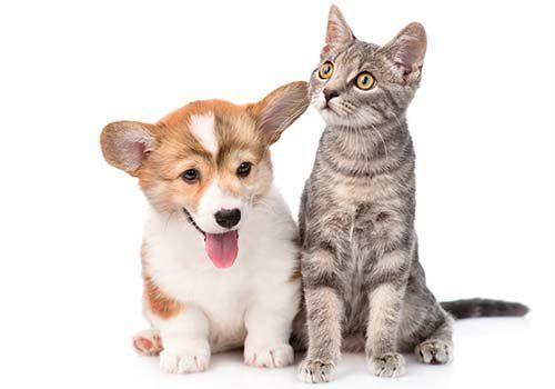 Simpatica foto di un cucciolo di cane e un gatto insieme