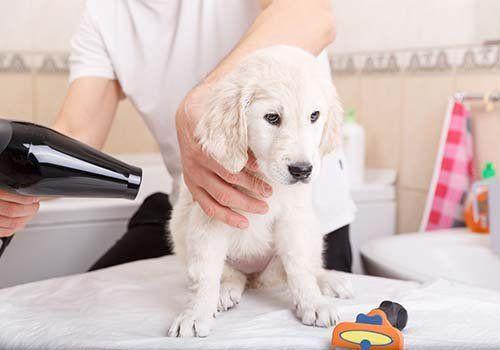 Asciugando il cane dopo il bagno