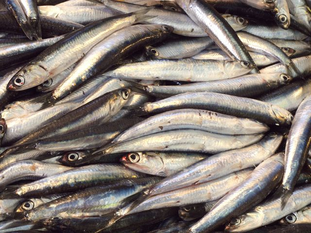 delle sardine