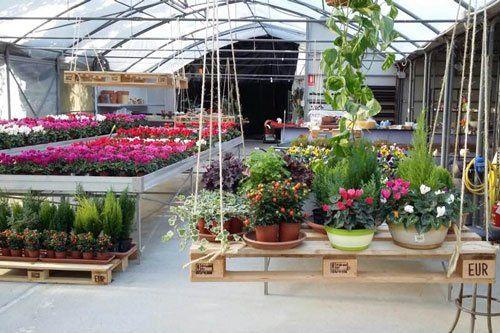 Esposizione di piante, ciclamini, conifere e composizione di piante in una serra