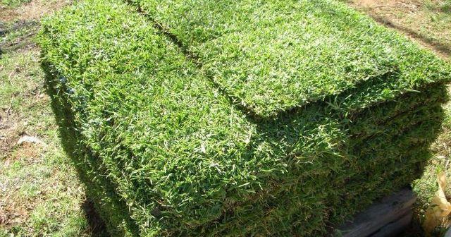 pile of turf