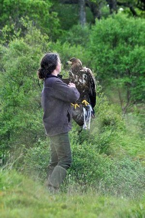 Elite Falconry