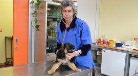 medici per animali, servizi veterinari, cliniche veterinarie