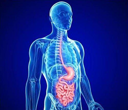 Scan del corpo umano e in rosso per contrasto il sistema digestivo