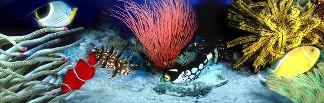 Marine Fish | Visalia, CA | The Ultimate Aquarium